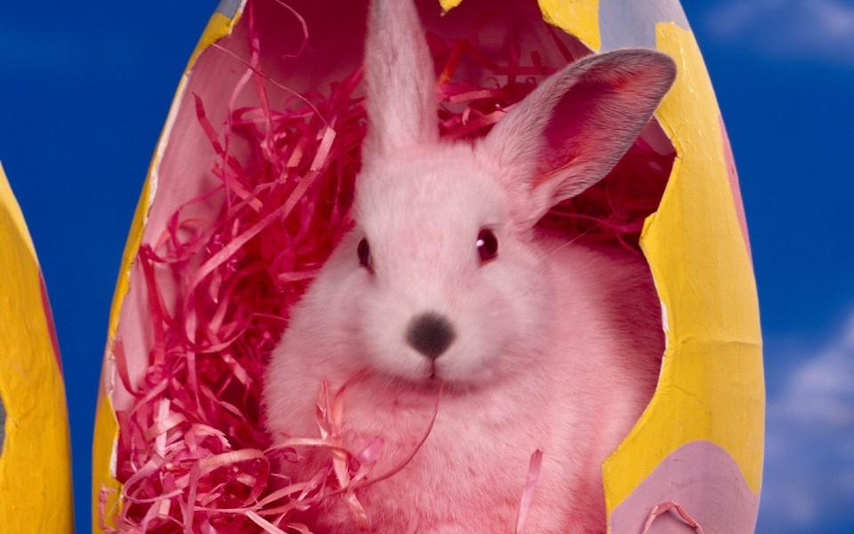 可爱小兔子高清壁纸