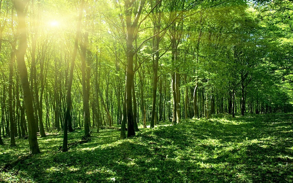 笔记本壁纸 自然风景壁纸 森林系列桌面壁纸下载