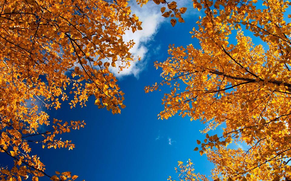 电脑壁纸 自然风景壁纸 秋天的童话高清壁纸下载