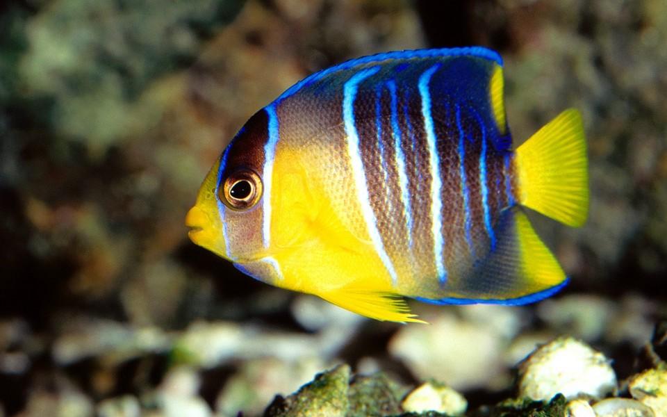 海底动物有哪些