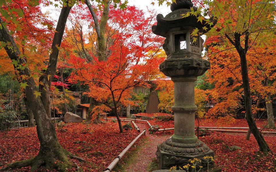 枫叶红叶满地风景桌面壁纸