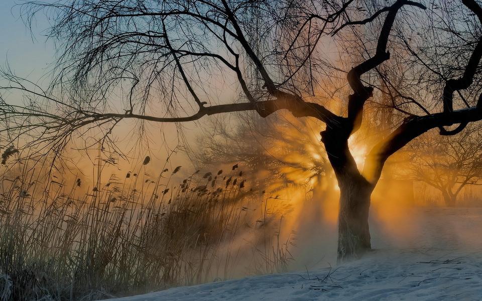 电脑壁纸 自然风景壁纸 清晨的雾高清桌面壁纸下载