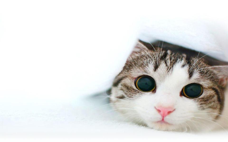 电脑壁纸 萌猫壁纸 可爱的小猫电脑桌面壁纸下载   壁纸下载: 1280x