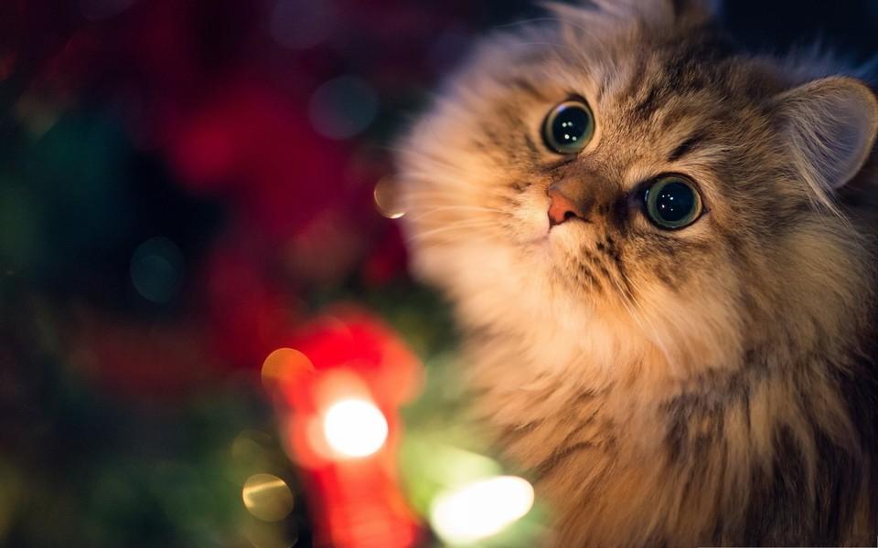 可爱猫咪壁纸桌面下载