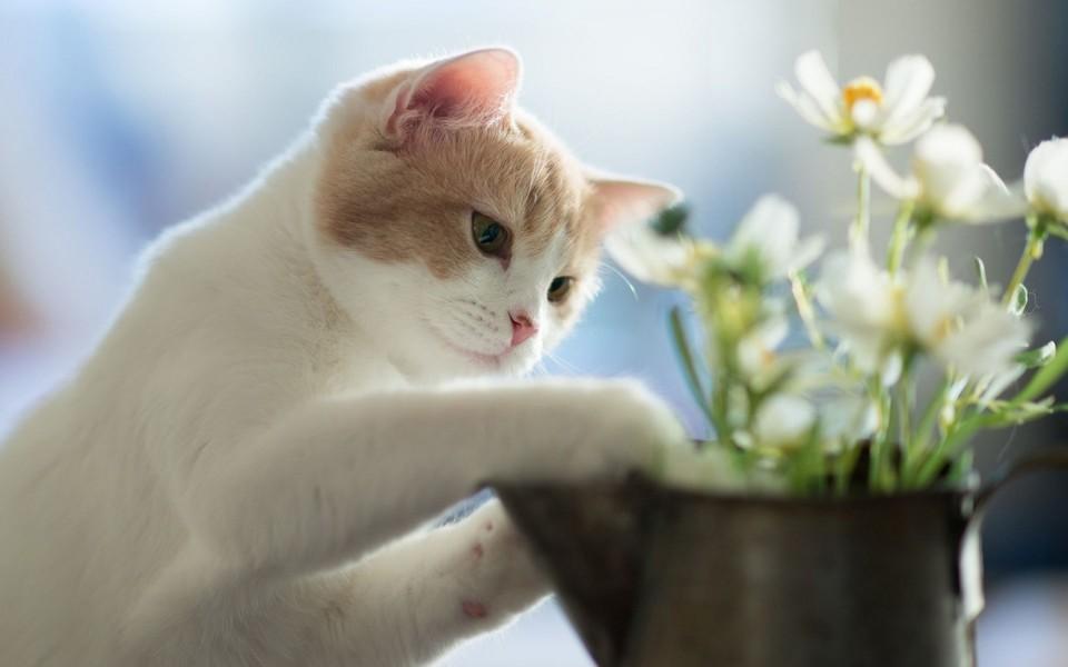 萌猫高清壁纸图片 第11页-zol桌面壁纸