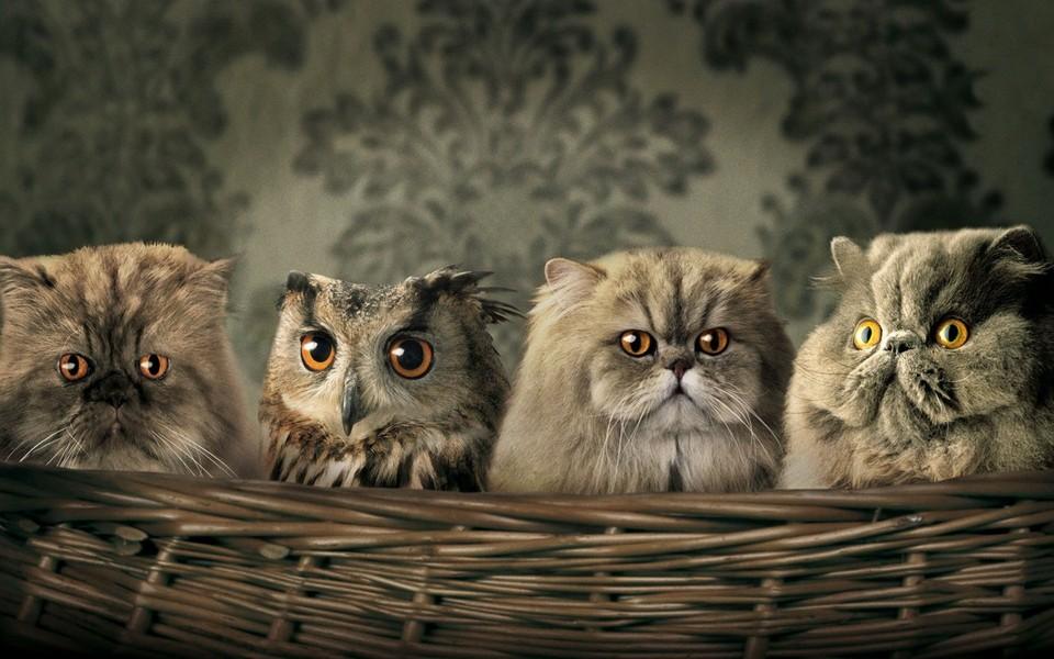 萌猫高清壁纸图片