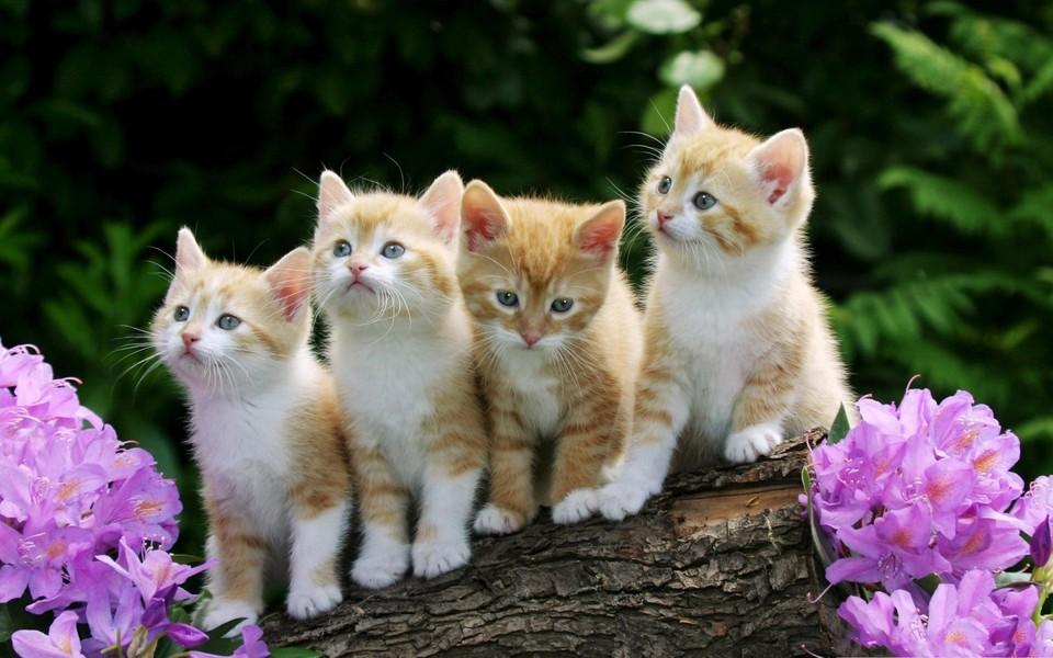 电脑壁纸 萌猫壁纸 可爱动物壁纸桌面下载