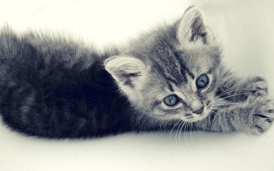 电脑壁纸 萌猫壁纸 可爱猫咪壁纸桌面下载下载   壁纸下载: 上一组图