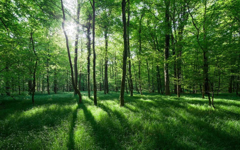 电脑壁纸 自然风景壁纸 丛林里的阳光桌面壁纸下载