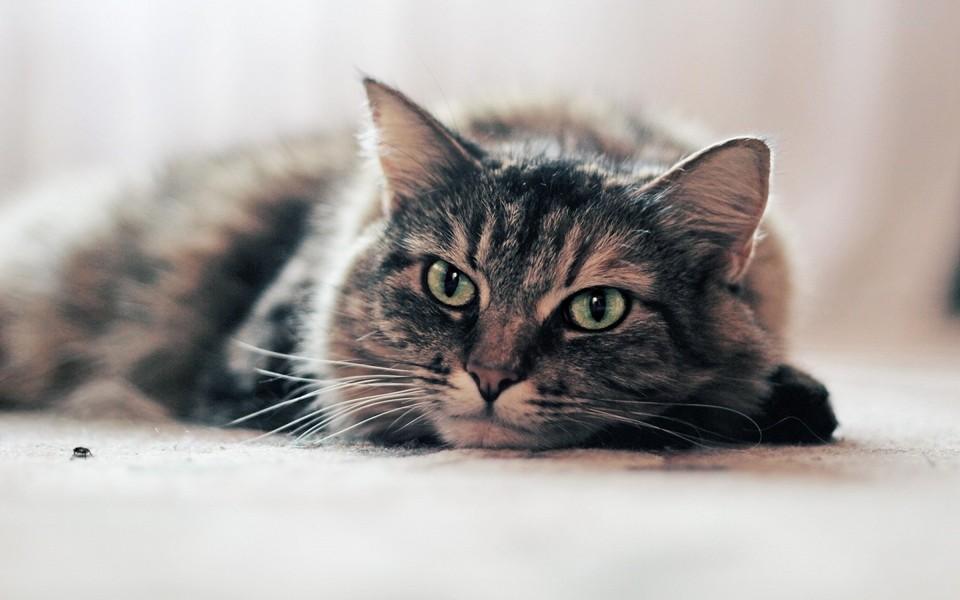 可爱萌猫壁纸图片