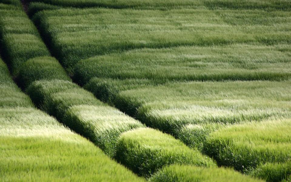 电脑壁纸 自然风景壁纸 绿色自然护眼壁纸桌面下载