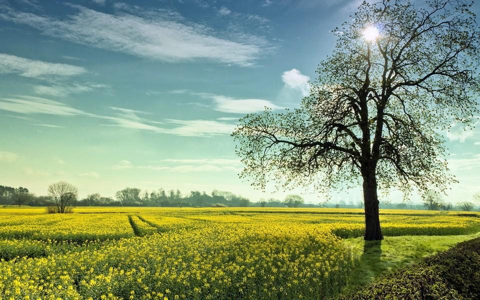 笔记本壁纸 自然风景壁纸 绿色自然护眼壁纸桌面下载