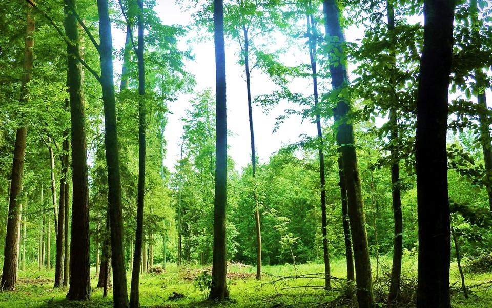 森林美景电脑壁纸桌面