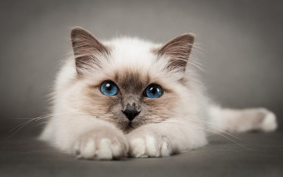 电脑壁纸 萌猫壁纸 高清小萌猫桌面壁纸下载   壁纸下载: 上一组图 下
