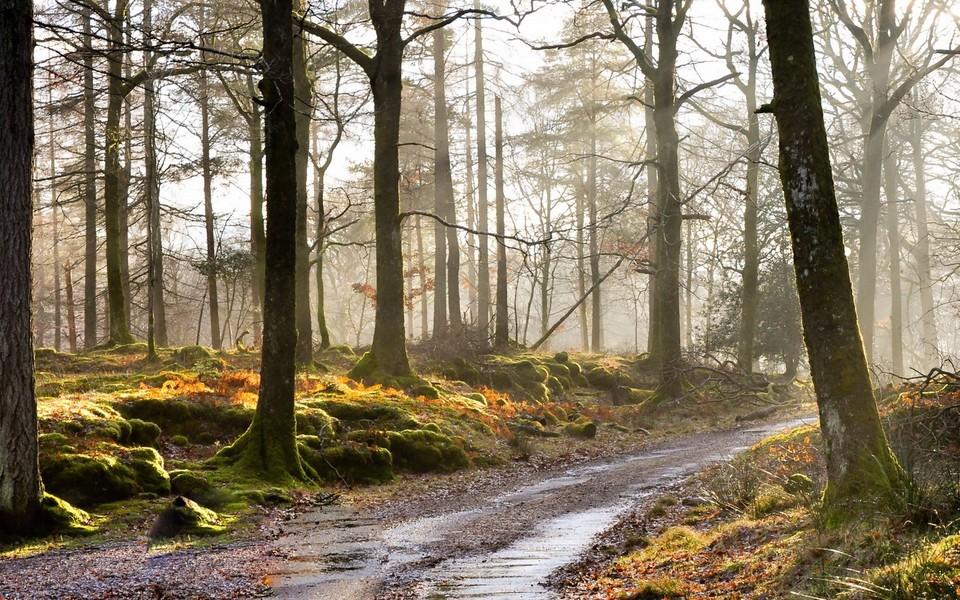笔记本壁纸 景色壁纸 秋天的风景宽屏壁纸图片下载