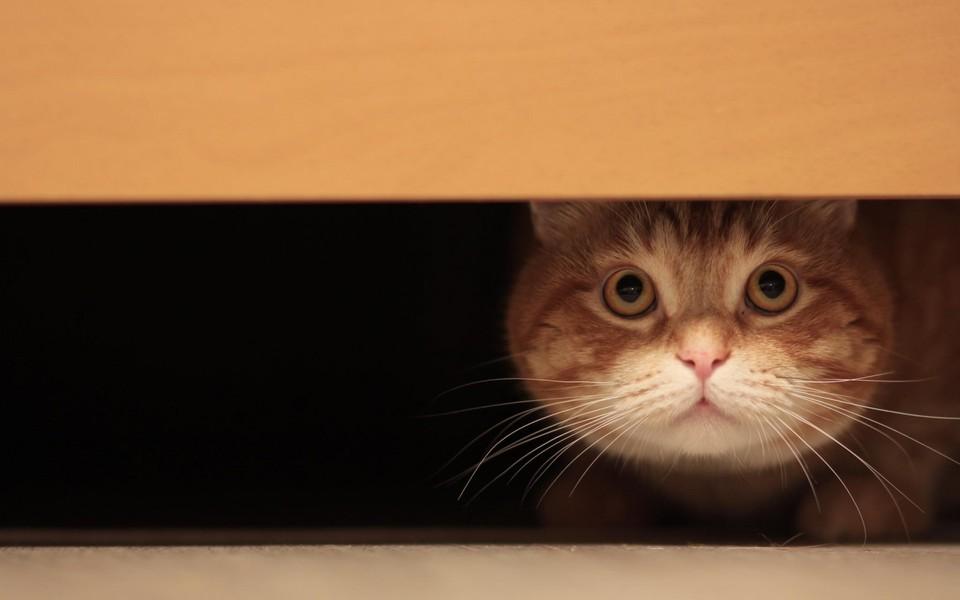 电脑壁纸 萌猫壁纸 高清小萌猫桌面壁纸下载