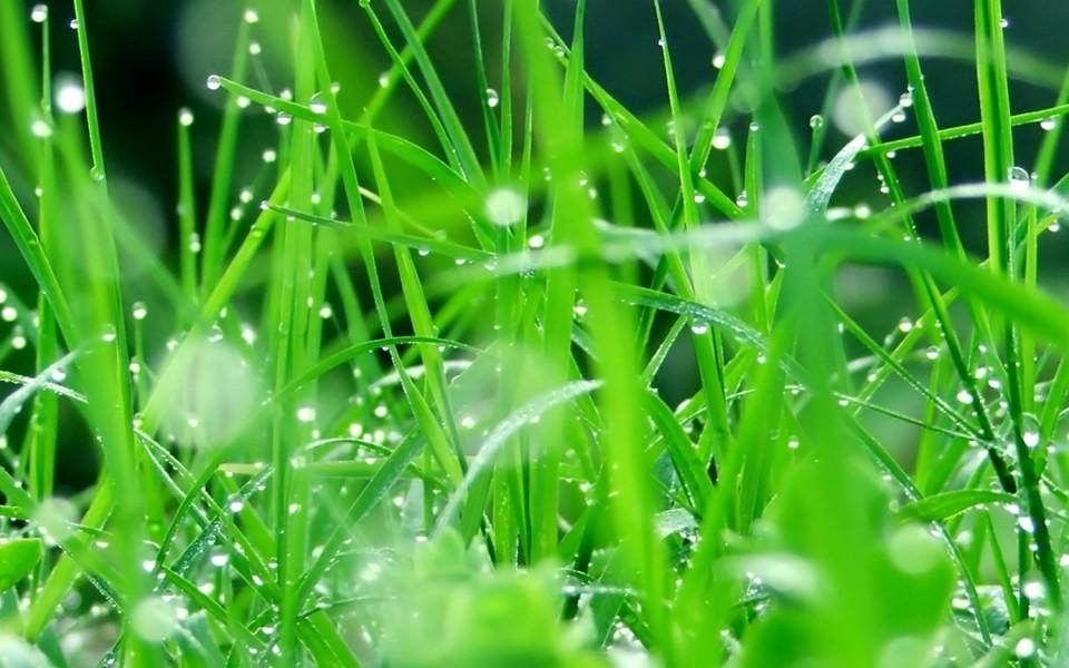 电脑壁纸 自然风景壁纸 绿色自然护眼壁纸下载