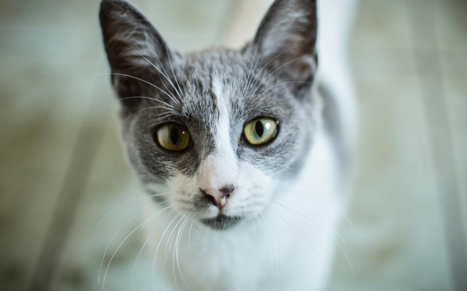 电脑壁纸 萌猫壁纸 可爱猫咪壁纸桌面下载