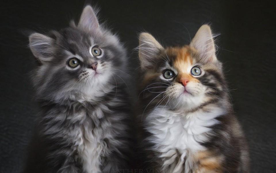 笔记本壁纸 萌猫壁纸 可爱猫咪壁纸桌面下载