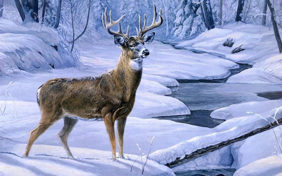 笔记本壁纸 动物壁纸 野生麋鹿高清壁纸下载