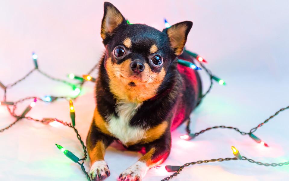 高清可爱动物壁纸图集