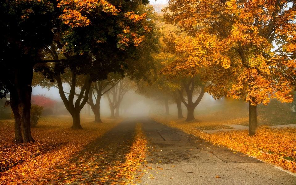 秋季风景读书图片大全