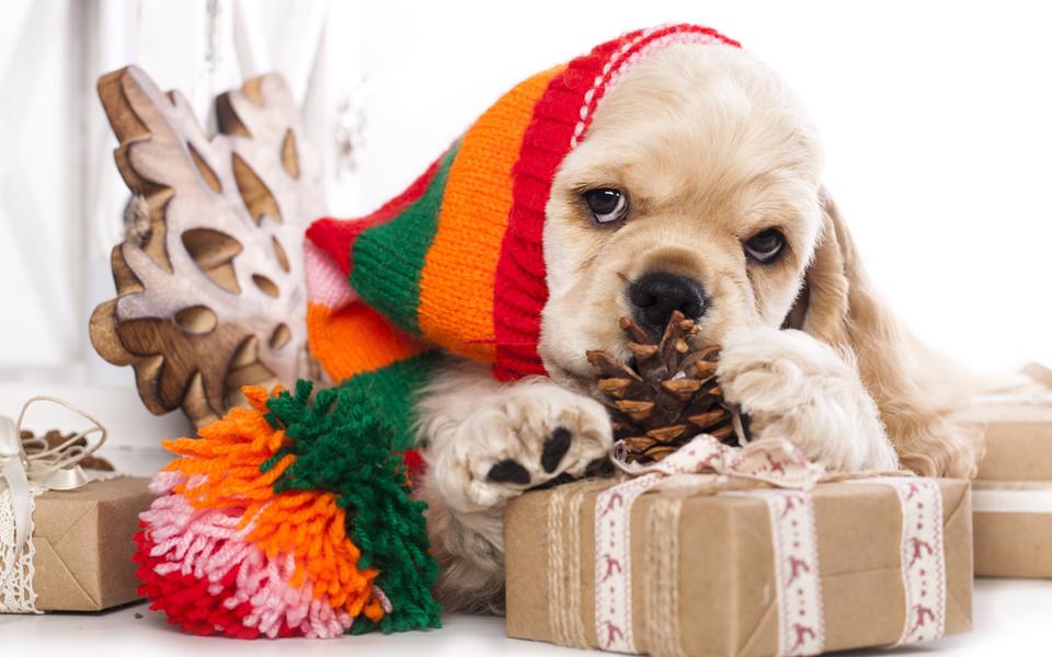 笔记本壁纸 动物壁纸 圣诞节可爱动物电脑壁纸下载