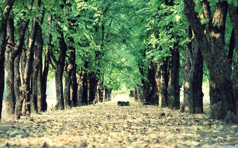温暖的图片森林意境