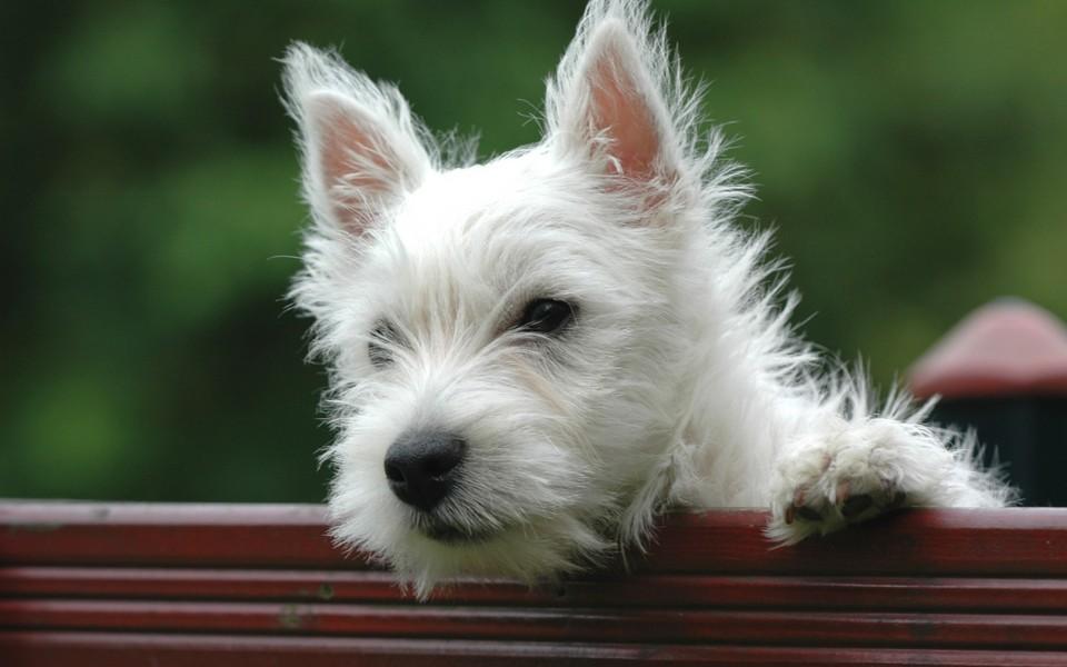 可爱狗狗萌宠图片壁纸