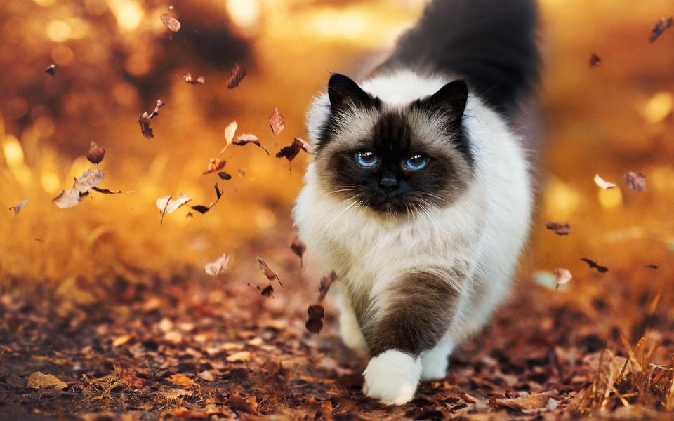 可爱小猫桌面壁纸