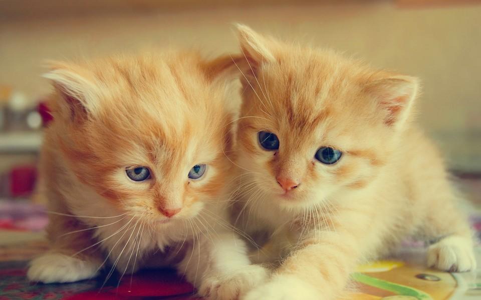 笔记本壁纸 萌猫壁纸 呆萌可爱桌面壁纸下载下载