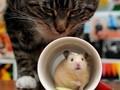 可爱的小老鼠图片壁纸大全