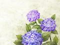 韩国浪漫手绘花卉壁纸