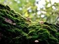 奇妙的微观世界蘑菇图片壁纸2