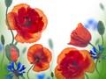 唯美植物桌面壁纸图片