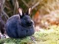 好看的兔子图片壁纸