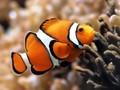 海洋世界鱼类图片壁纸