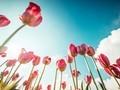 小清新唯美花海植物高清壁纸