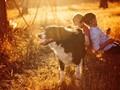 狗最好的陪伴图片壁纸2