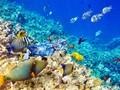海底珊瑚鱼群唯美图片桌面壁纸