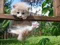 草地里玩耍的猫咪图片桌面壁纸