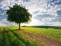 唯美意境简单树图片壁纸2