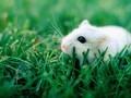 呆萌小鼠可爱图片高清图片壁纸