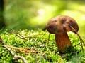 漂亮的野生蘑菇高清图片桌面壁纸3