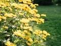 小清新唯美花卉植物图片壁纸