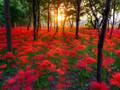 彩色花卉风景壁纸