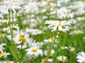 苏州园博园里的花朵桌面壁纸