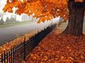秋天黄色唯美壁纸