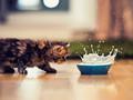 可爱的小猫高清壁纸