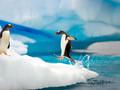 南极风光风景企鹅宽屏壁纸